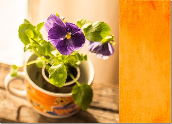pansies-with-orange-kk-texture