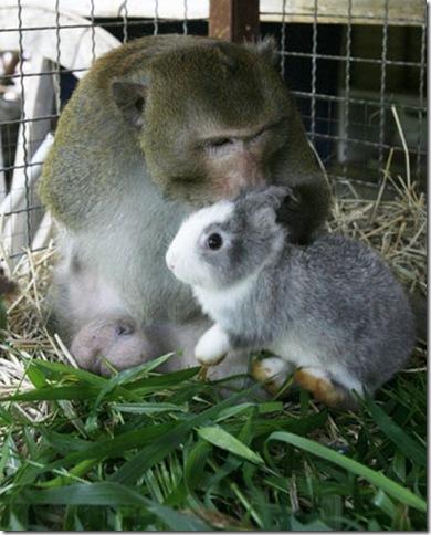 9 Hewan Berbeda Jenis yang Menjadi Sahabat Sejati_monyet-dan-kucing