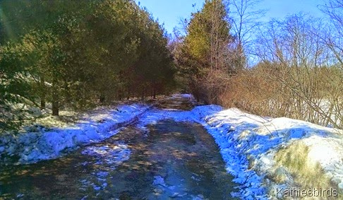 3-24-15 trail at bay bridge