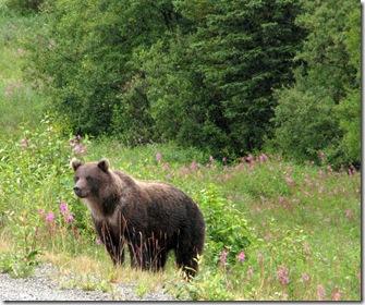 1st Brown Bear 8-16-2011 11-20-20 AM 2023x1689