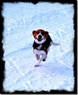 Buster running snow