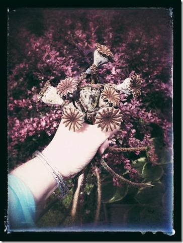 poppy remnants