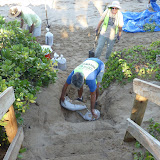 Kamaole 3 workday 9-12-11 005.JPG