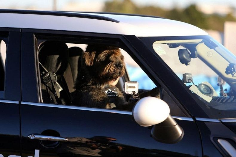 driving-dogs-5