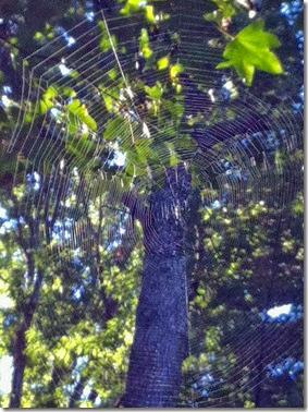 Trapeeze web
