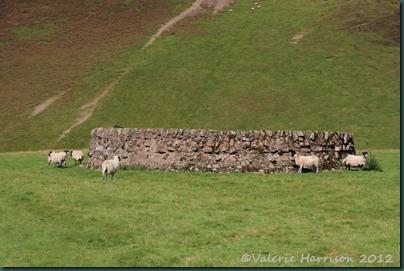 40-sheep-pen
