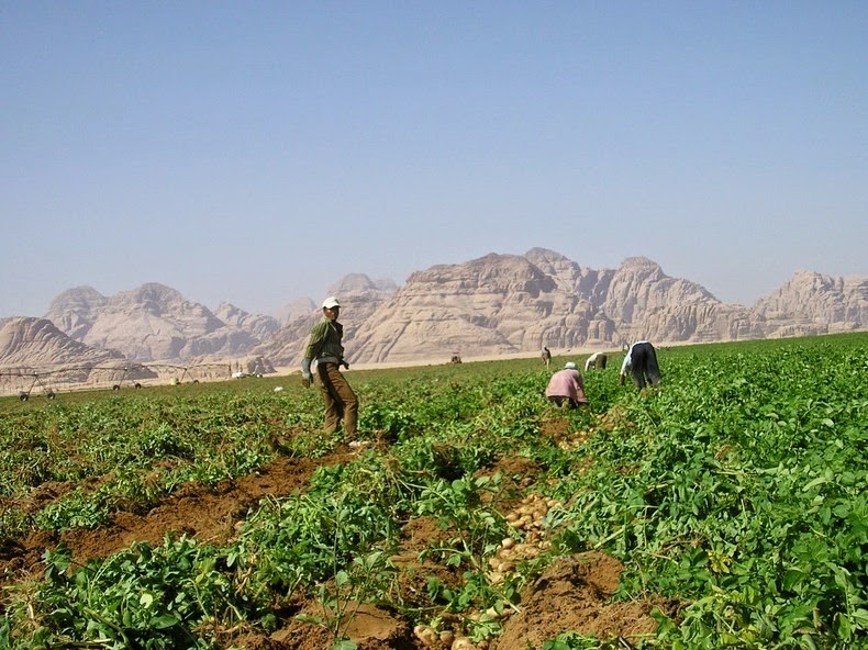 wadi-rum-farming-2
