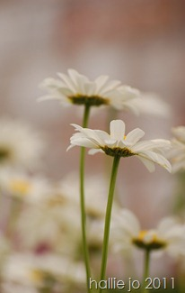 Fleur19