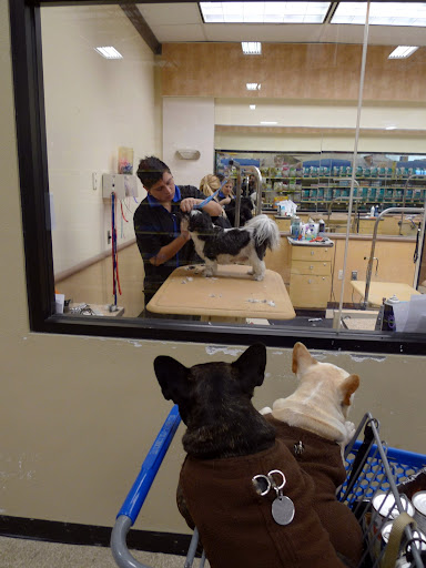 Francesca, look at that dog getting groomed.  Too bad we can't meet and greet him with a good sniff down.