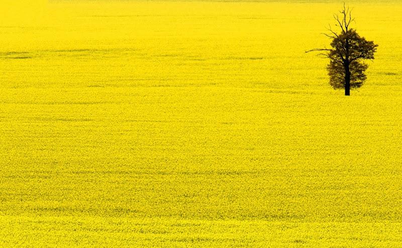 yellow_031.jpg