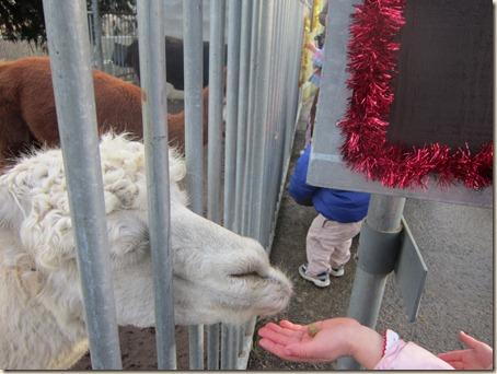 12-23 Reindeer Fesitival 097