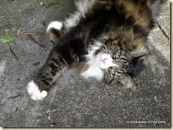 Large handsome cat