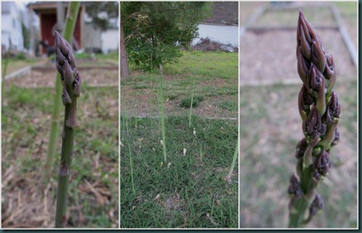 asparagus collage