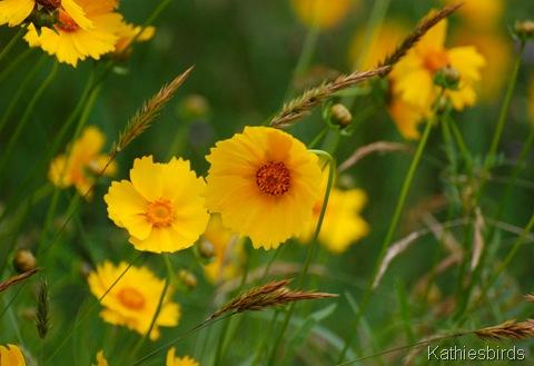 4. Wildflowers-kab