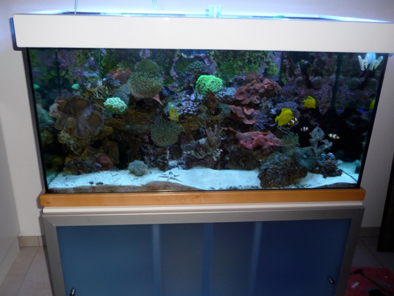 meerwasseraquarium salzwasseraquarium mit unterschrank ca. Black Bedroom Furniture Sets. Home Design Ideas