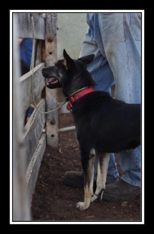 dog fencew