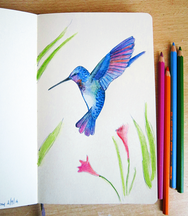 hummingbird drawing - colobrì
