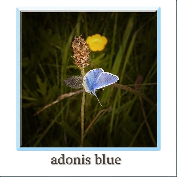 adonis4