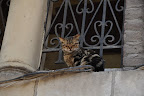 Stray cats roam freely around Cairo