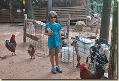 Janie With Goats