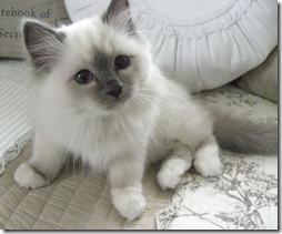 Fotos de gato buscoimagenes (35)
