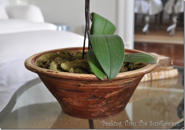 terra cotta bowl2