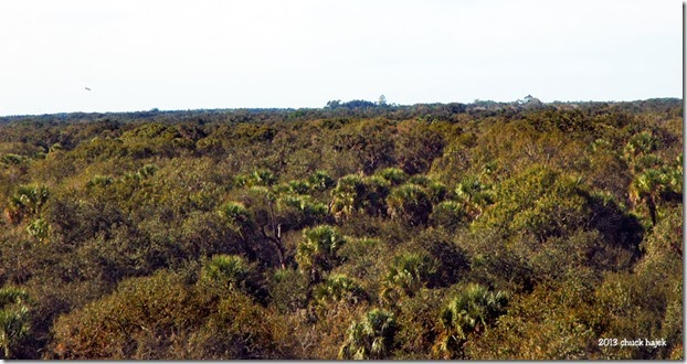 Myakka tower view 126