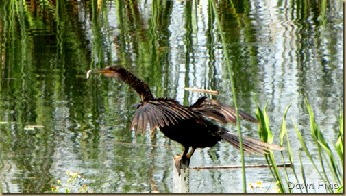 OrlandoWetlands_103