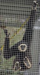 Monkey Exotic Game Park