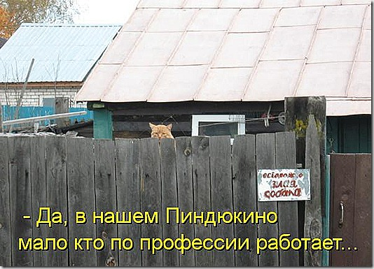 kotomatritsa_Cx
