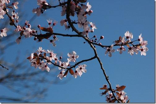 12.03.18 spring walk 002