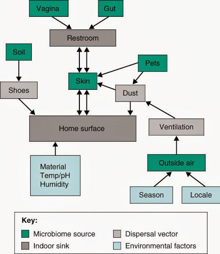 Fuentes y vías de transmisión de comunidades microbianas | Fuente: Kelley & Gilbert, 2013.
