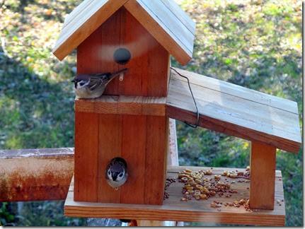 birdmotel10-26-13e