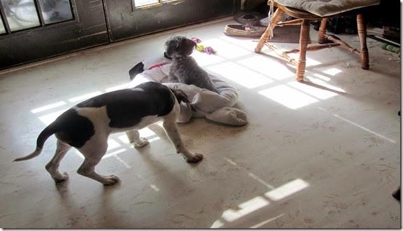 Charlie&Sadie10-18-14f