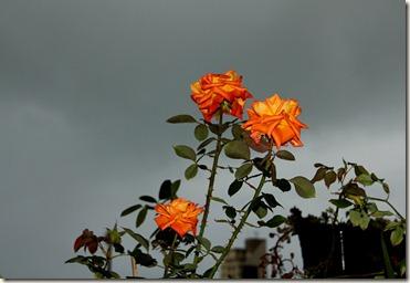 Flores 05-09-2012 006