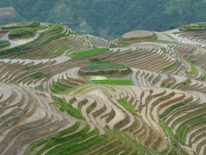Beautiful pictures of rice terraces amusing planet for Terrace farming definition