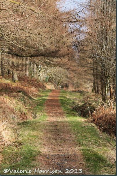 39-woodland-path