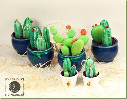 op-cactus-fine2