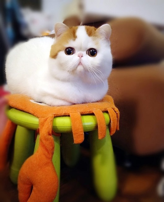 5-Кот-экзот Снупи на табуретке