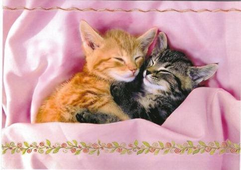 Cute-Kittens-kittens-13247987-800-566
