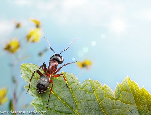 formigas inacreditaveis incriveis desbaratinando  (42)