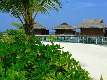 09. Plante in Maldive.JPG