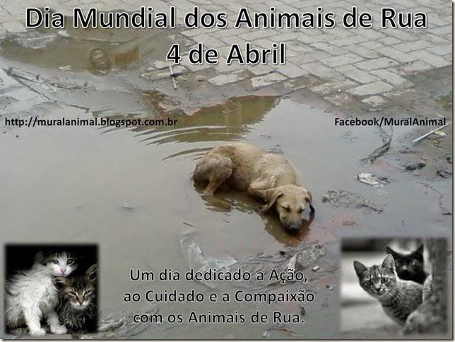 Dia Mundial dos Animais de Rua 2