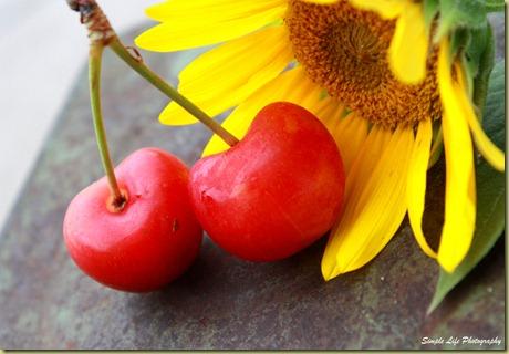 Sunny Cherry