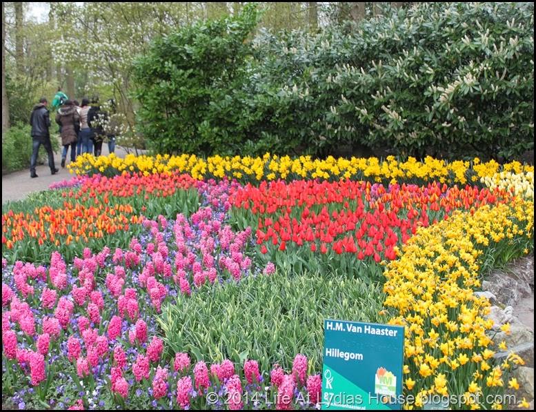 Keukenhof Gardens 32