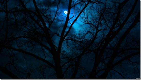 14899-beautiful-dark-scenery-moon-forest