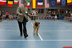 20130510-Bullmastiff-Worldcup-0217.jpg