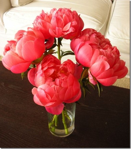 peonies via pinterest