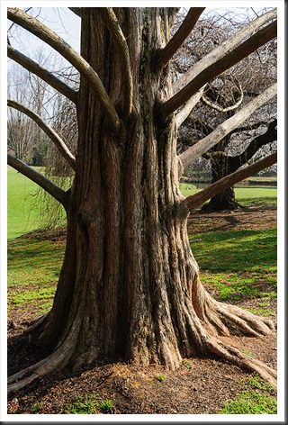 Brookside Gardens - Tree