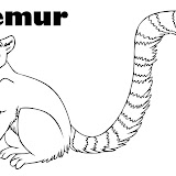 how-to-draw-a-lemur-step-7.jpg